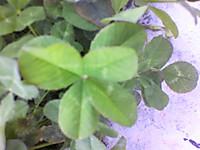 2012_0619_120300p1000116_2