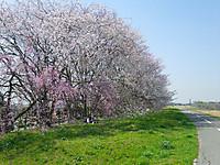 Edosai11