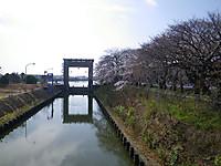 Edosai4