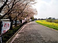 Nagorinosakura14