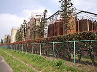 Nagorinosakura6