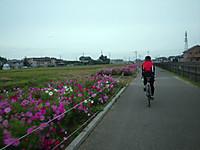 Kosumosupota1