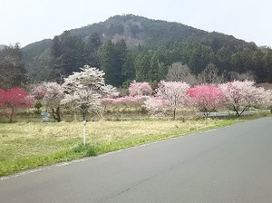 20170417akiyama2